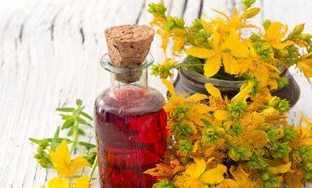kantaron-bitkisi-ve-yaginin-faydalari